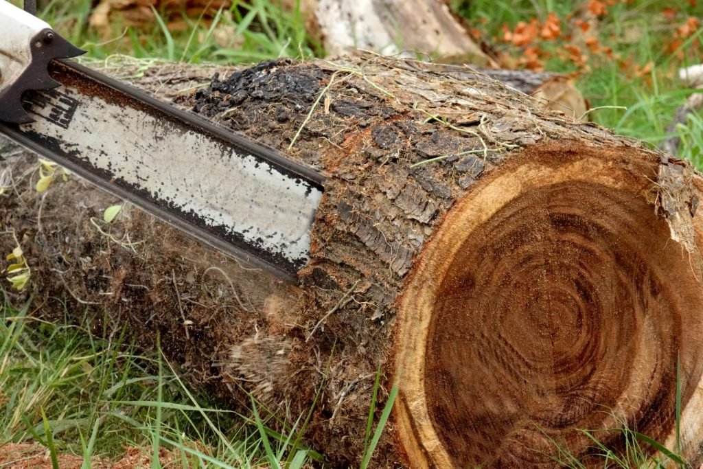 Cutting tree with machine