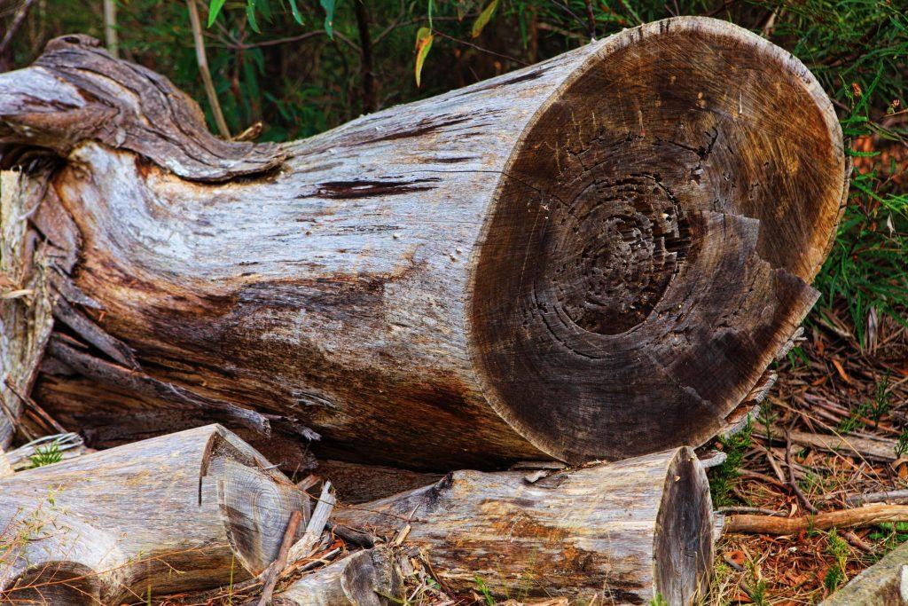 Tree Service Odgen - Affordable Tree Removal in Ogden